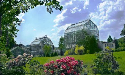 Львів`ян запрошують на День відкритих дверей до Ботанічного саду