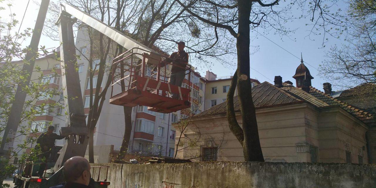 Мешканці Сихова скаржаться на санітарну обрізку гілок