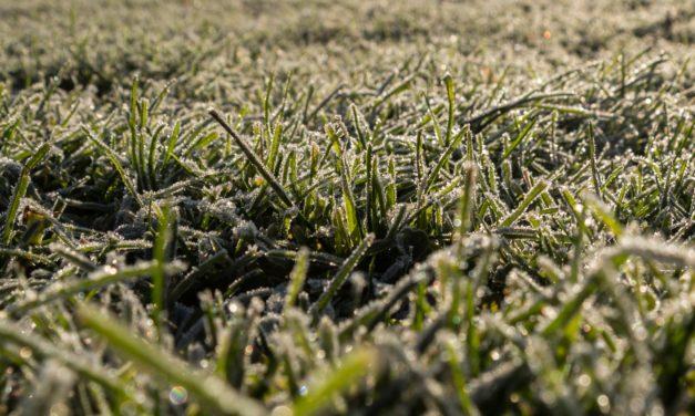 Синоптики попереджають львів'ян про заморозки