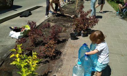 Як сихівчани Новий Львів зеленішим робили (фото)