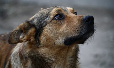На Сихові шукають волонтерів для підрахунку безпритульних тварин