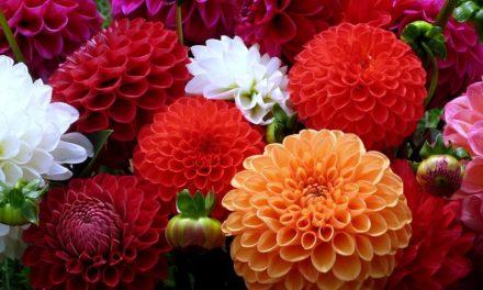 Ботанічний сад кличе на День відкритих дверей