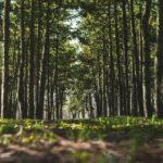 У четвер Сихівський ліс прибиратимуть від сміття. Як долучитися