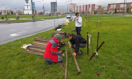 У Сихівському районі планують провести озеленення. Як долучитися
