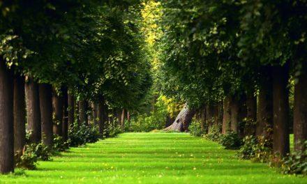 Де у Сихівському районі висадять дерева до кінця осені