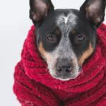 Як вберегтися від застуди та грипу. Фахові коментарі