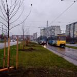 Вздовж трамвайної колії на Сихові висадили понад півсотні дерев