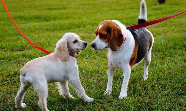 Де у Сихівському районі облаштують майданчики для вигулу собак
