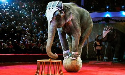 Уряд підтримав законопроект щодо заборони використання тварин у цирку