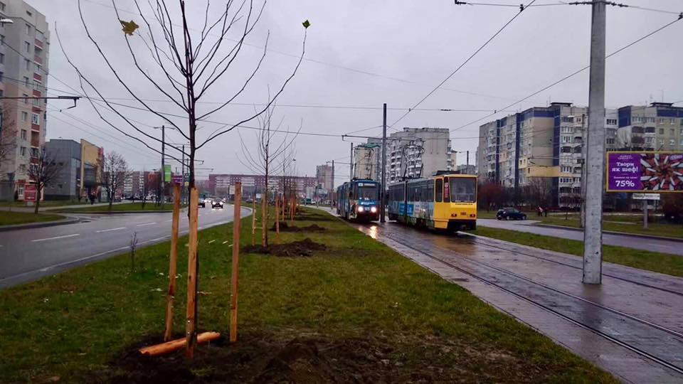 В Україні пропонують запровадити обов'язкове озеленення вулиць і доріг