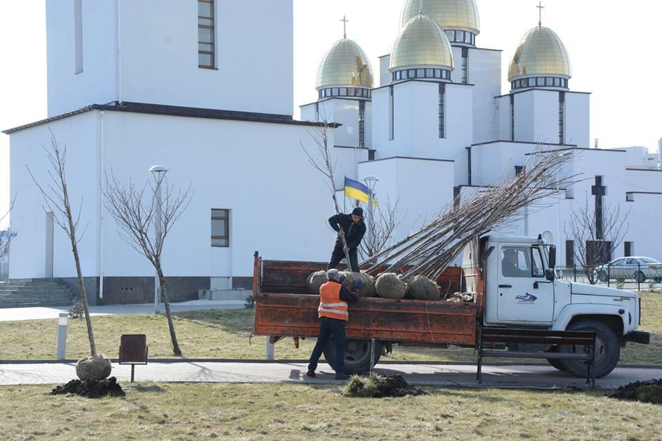Замість зламаних дерев у парку Івана Павла ІІ висадили нові сакури (фото)