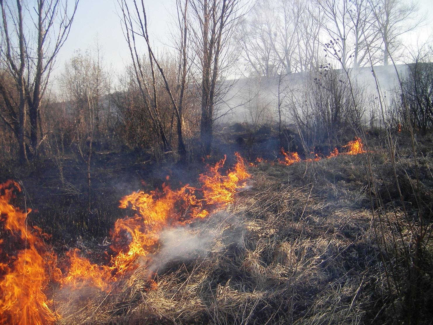 Чому не можна спалювати суху траву і як за це карають (відео)