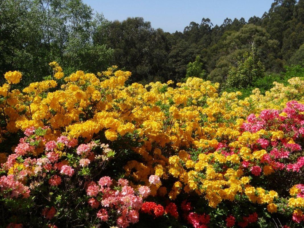 У неділю у Ботанічному саду буде День відкритих дверей