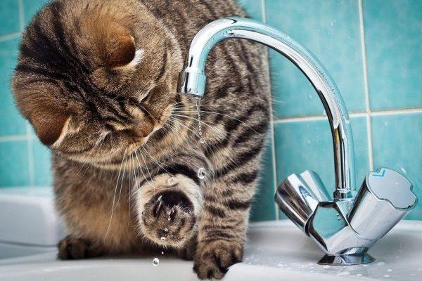 На Новому Львові немає води через аварію. Коли відновлять