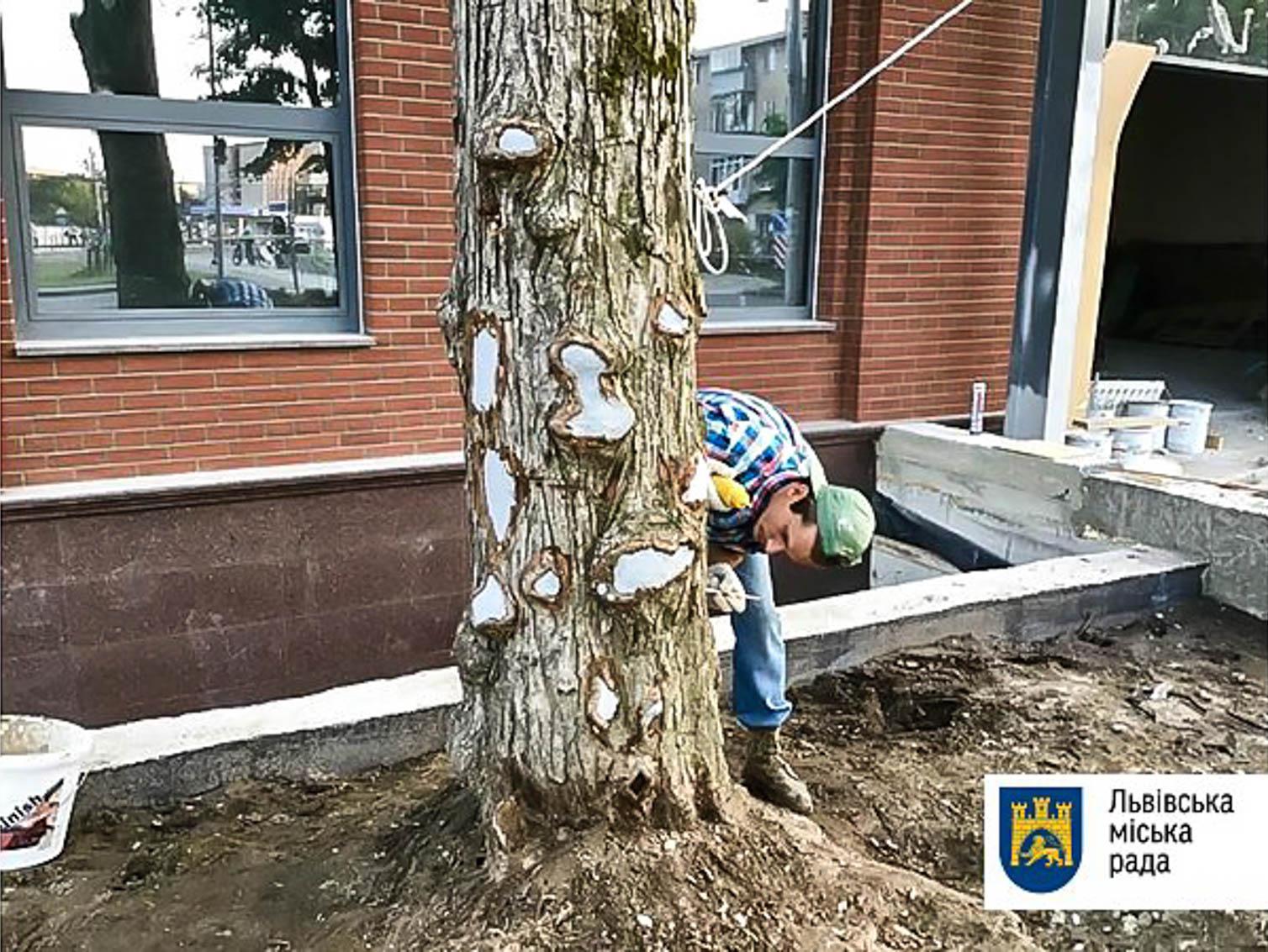 На Угорській лікують пошкоджені рідкісні багряники
