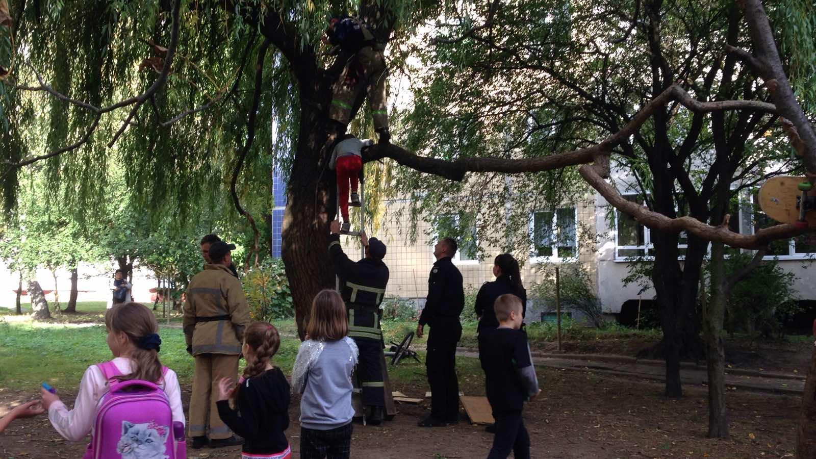 На Сихові 9-річний хлопчик виліз на дерево і не міг злізти