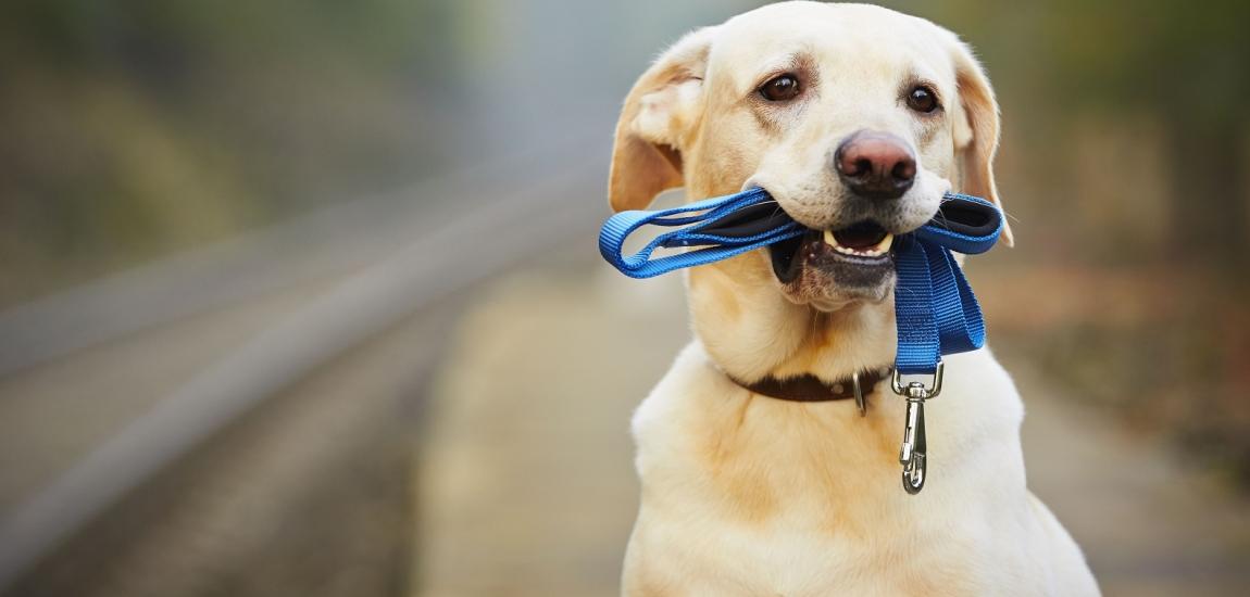 Коли у Львові зроблять майданчики для вигулу собак