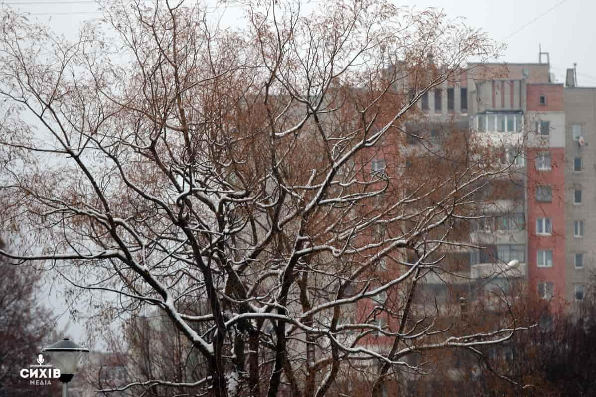 На обрізку дерев на Сихові виділять більше двох мільйонів гривень