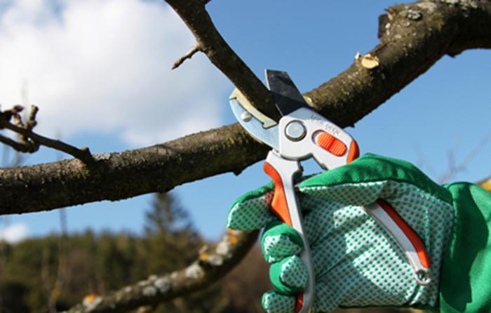 На Сихові проведуть санітарну обрізку дерев. Локації