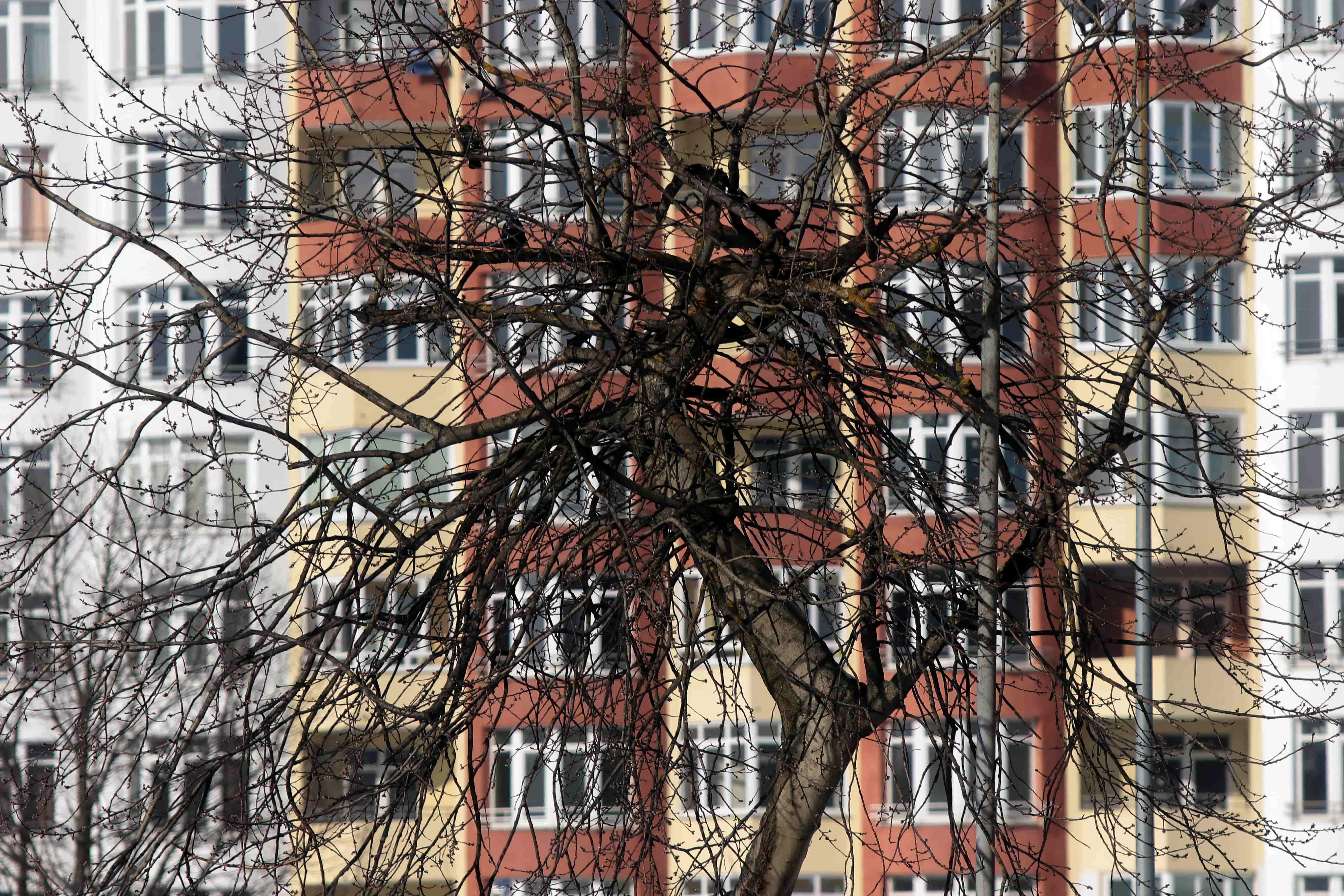 Стежити за станом дерев на Сихові будуть за два мільйони гривень. Результати тендеру