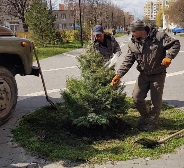 У Сихівському районі цього тижня висадили 79 дерев