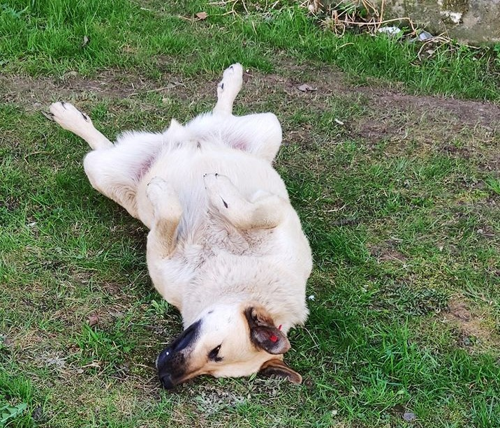 На Сихові невідомі отруїли собак