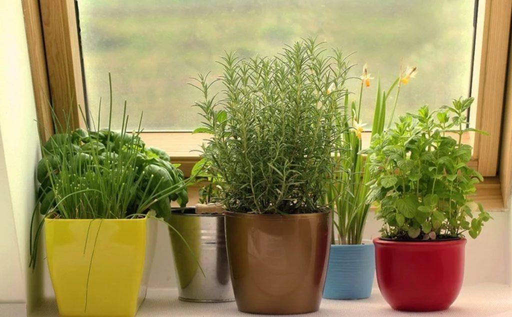 Міні-город на підвіконні: що можна виростити вдома