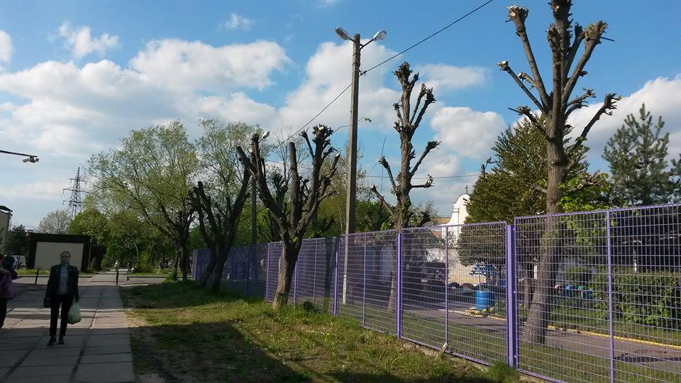 На Сихові мешканці скаржаться на знищення дерев