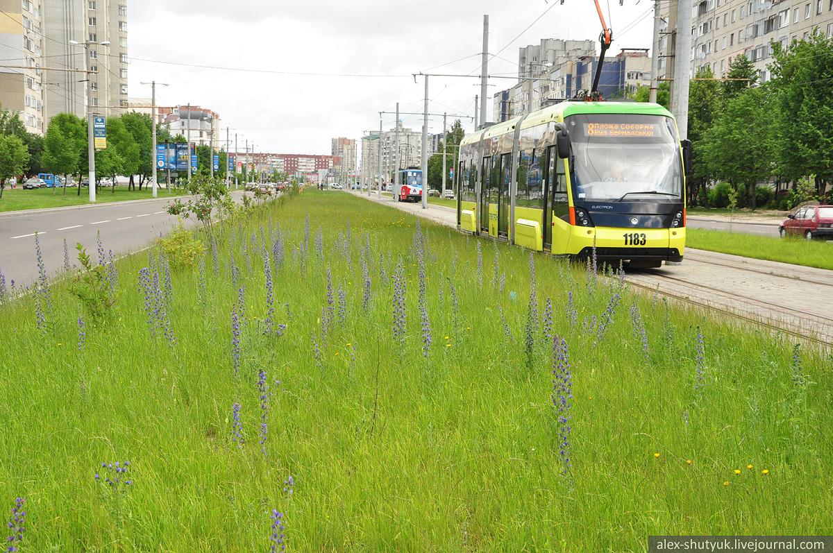 Львів'яни збирають підписи проти частого скошування трави у місті