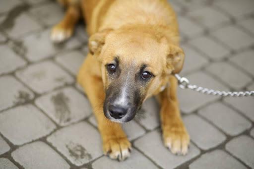 Ветеринарна клініка ЛКП «Лев» відновлює цілодобовий режим роботи