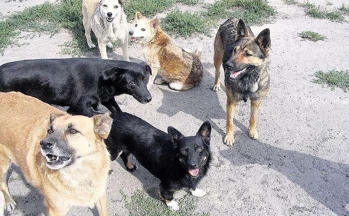 У Львові проведуть підрахунок безпритульних собак