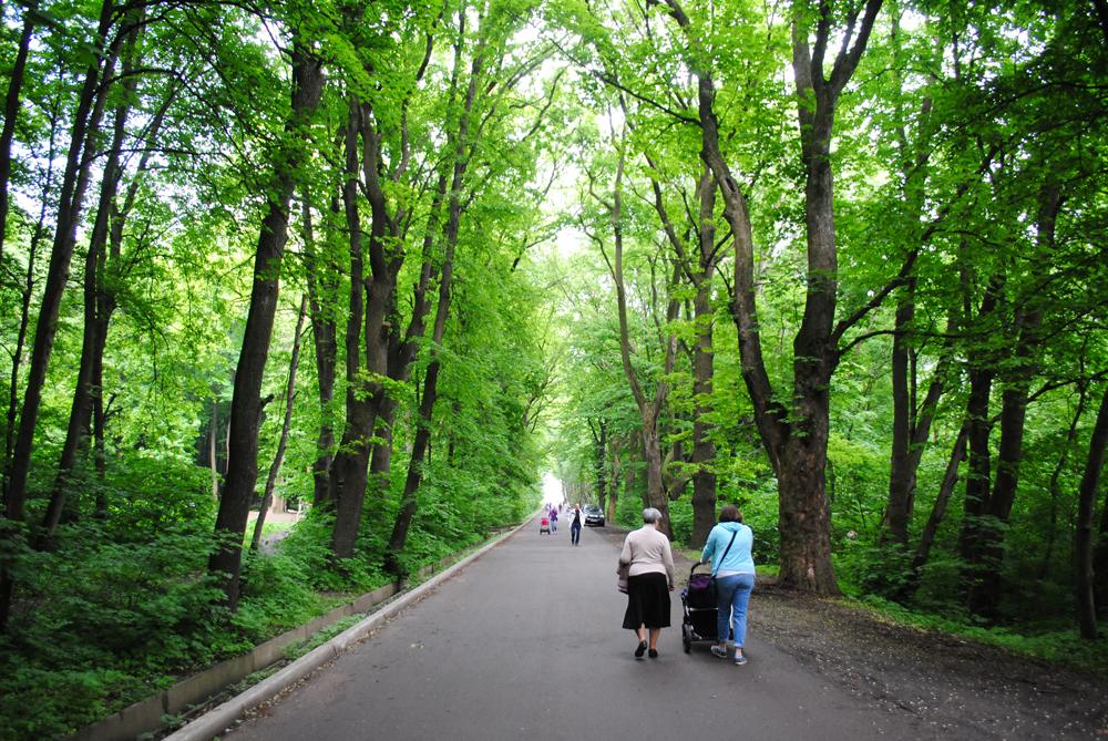 У Сихівських парках проведуть повторні акарицидні обробки