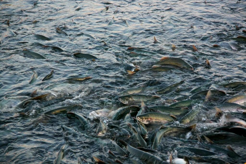 На Львівщині стартує осінньо-зимова заборона на вилов риби