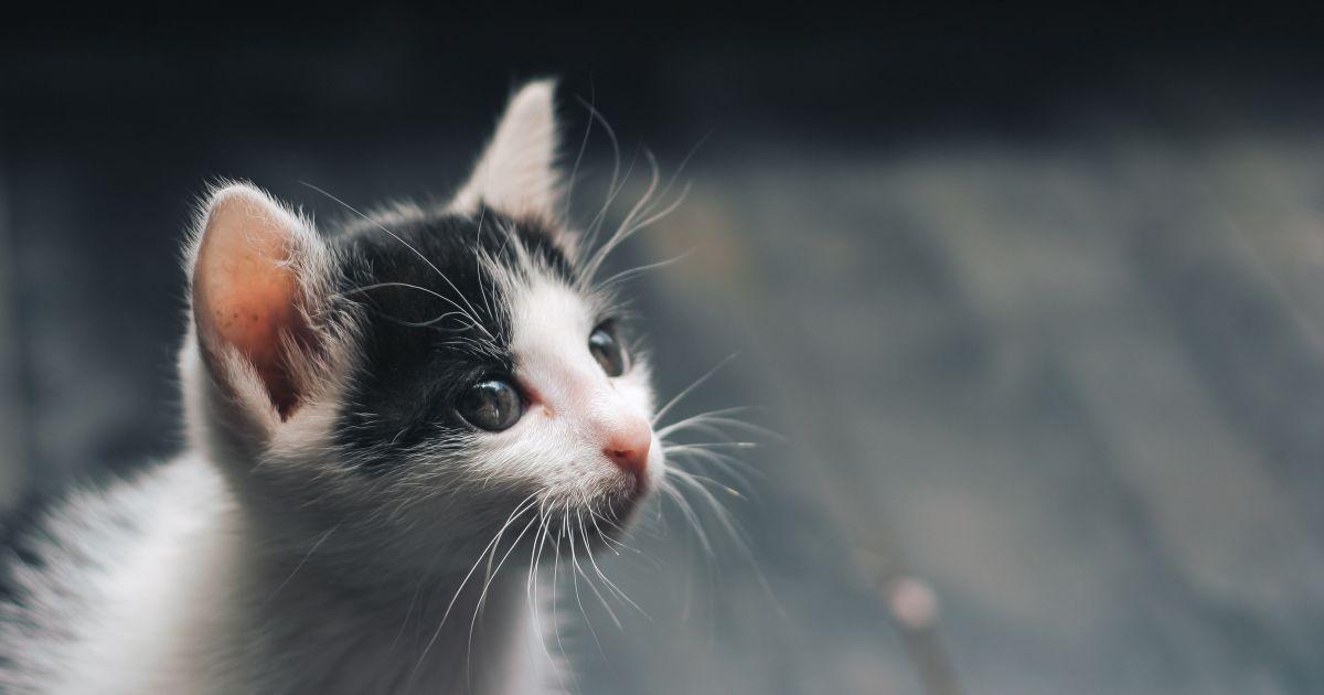 У Львові з'являться будиночки для безпритульних котиків