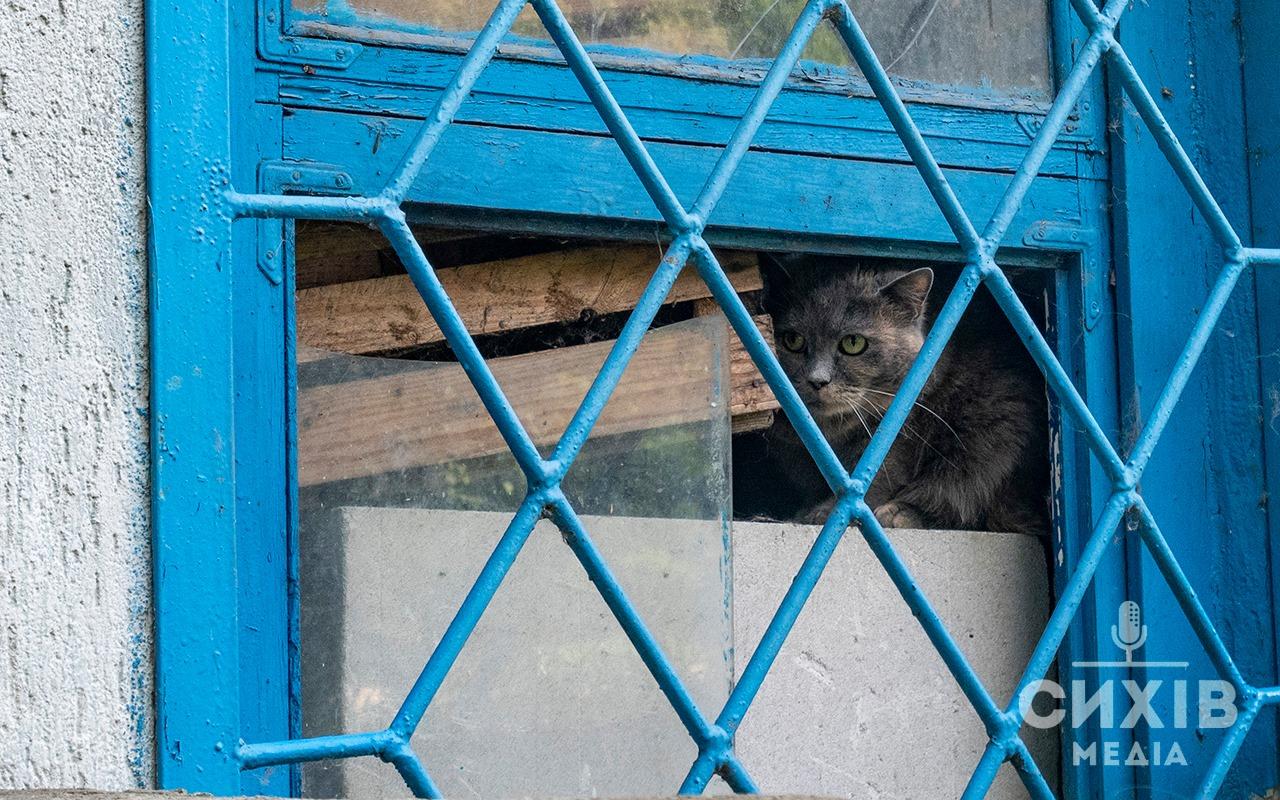 Петицію щодо стерилізації вуличних котів підтримали львів'яни