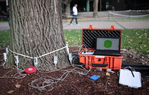 У Львові з'явиться пристрій для діагностики дерев